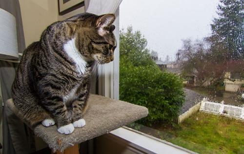 Rainy Day Henry 8