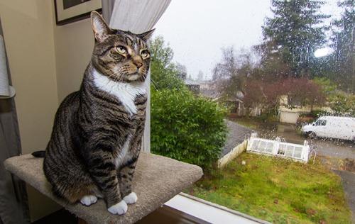 Rainy Day Henry 9