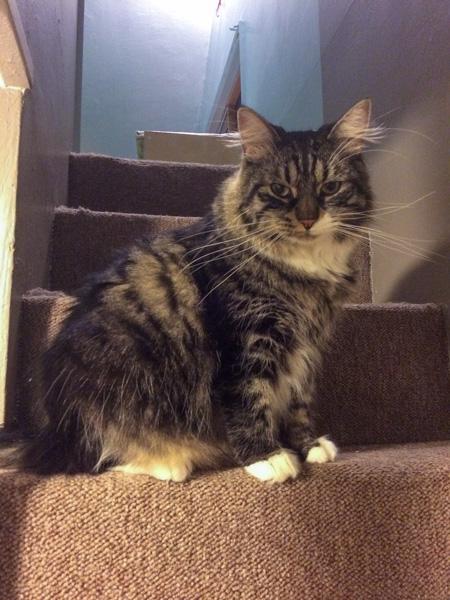 Thomas 1 on steps