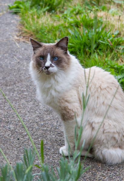 Charlie sitting on sidewalk.