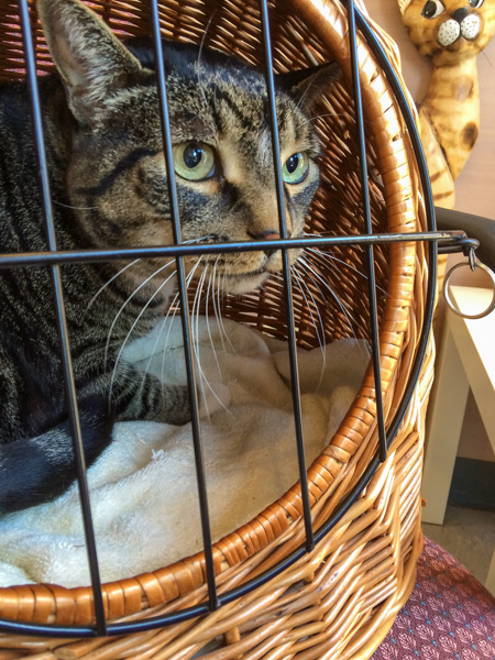 Henry in Kitty Jail