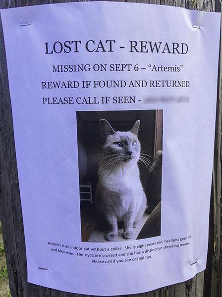 Lost Cat Poster- Artemis