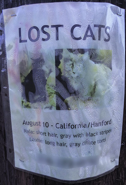 Lost Cat Poster- Nala and Louie
