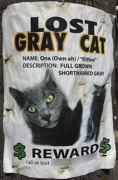 Lost Cat Poster- Ona